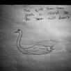 Swan - anon